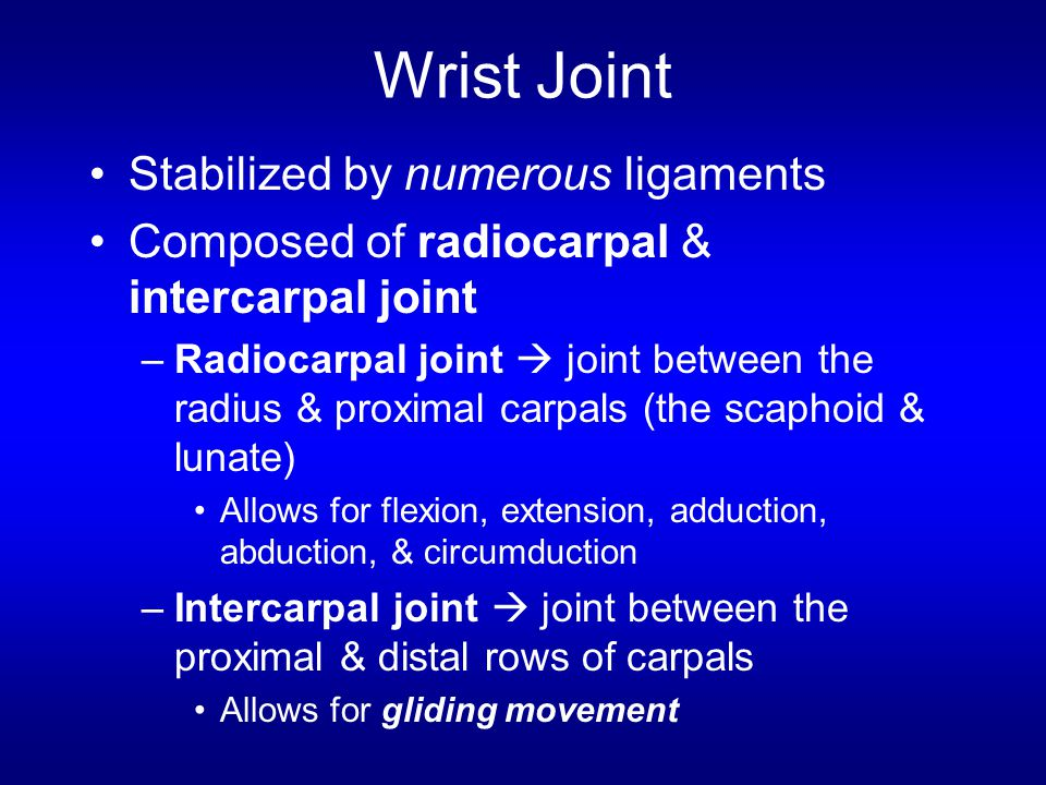 Wrist Joint Stabilized by numerous ligaments
