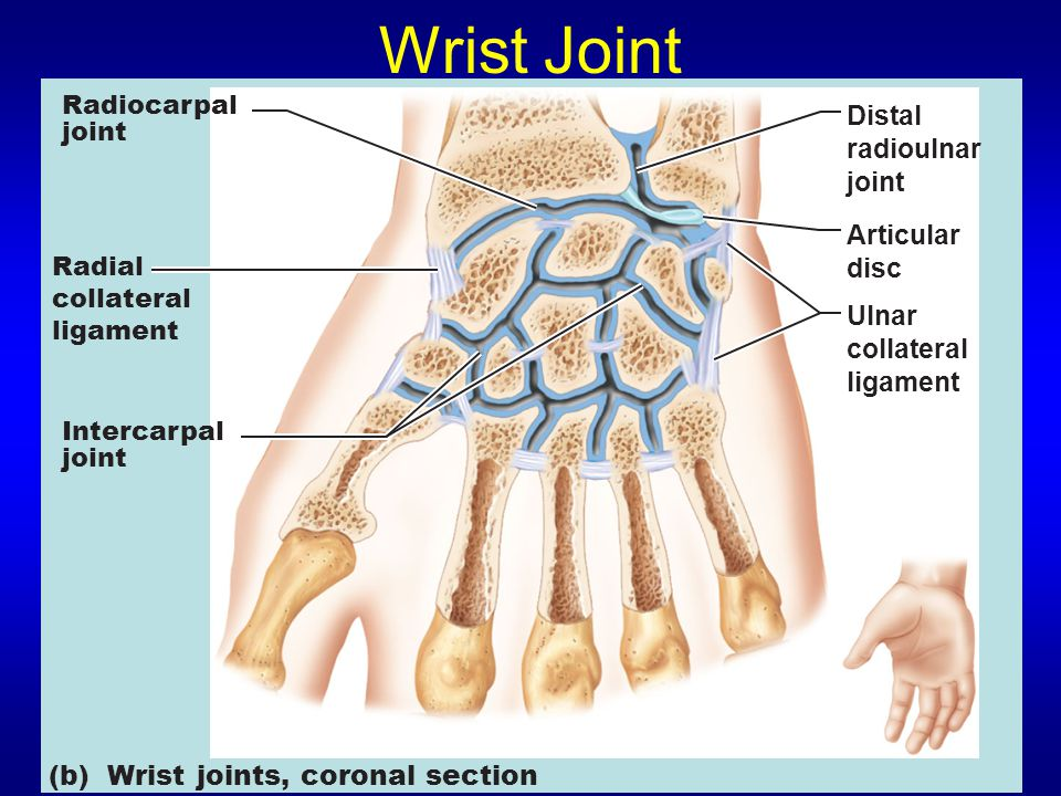 Wrist Joint Distal radioulnar joint Articular disc Ulnar collateral