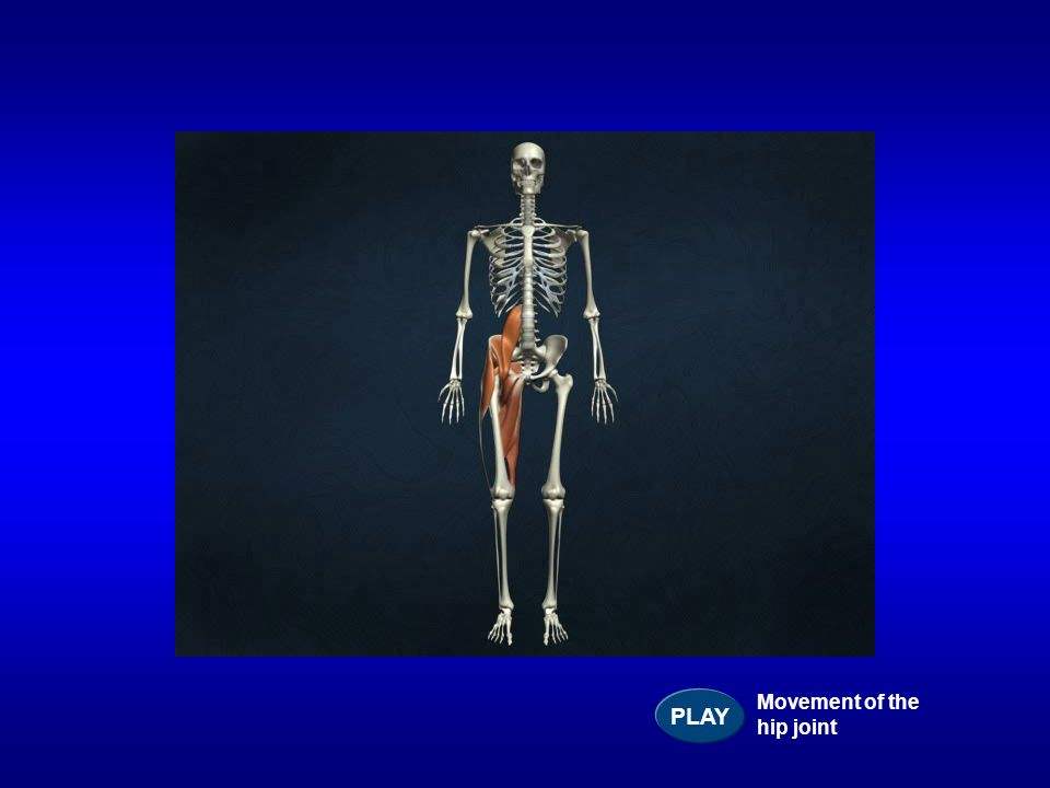 PLAY Movement of the hip joint