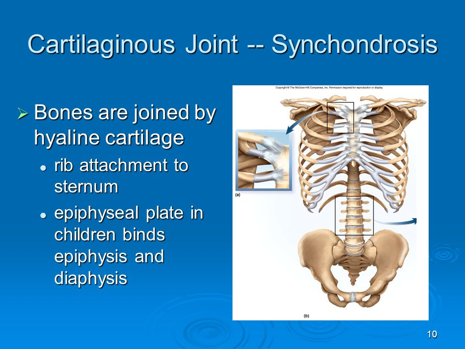 Cartilaginous Joint -- Synchondrosis