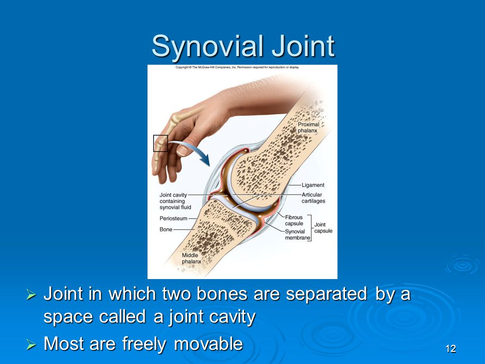 Synovial Joint Joint in which two bones are separated by a space called a joint cavity.