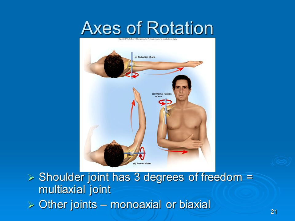Axes of Rotation Shoulder joint has 3 degrees of freedom = multiaxial joint.