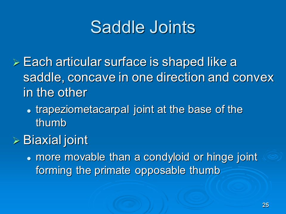Saddle Joints Each articular surface is shaped like a saddle, concave in one direction and convex in the other.