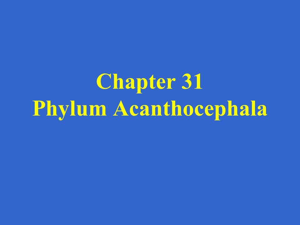 Chapter 31 Phylum Acanthocephala
