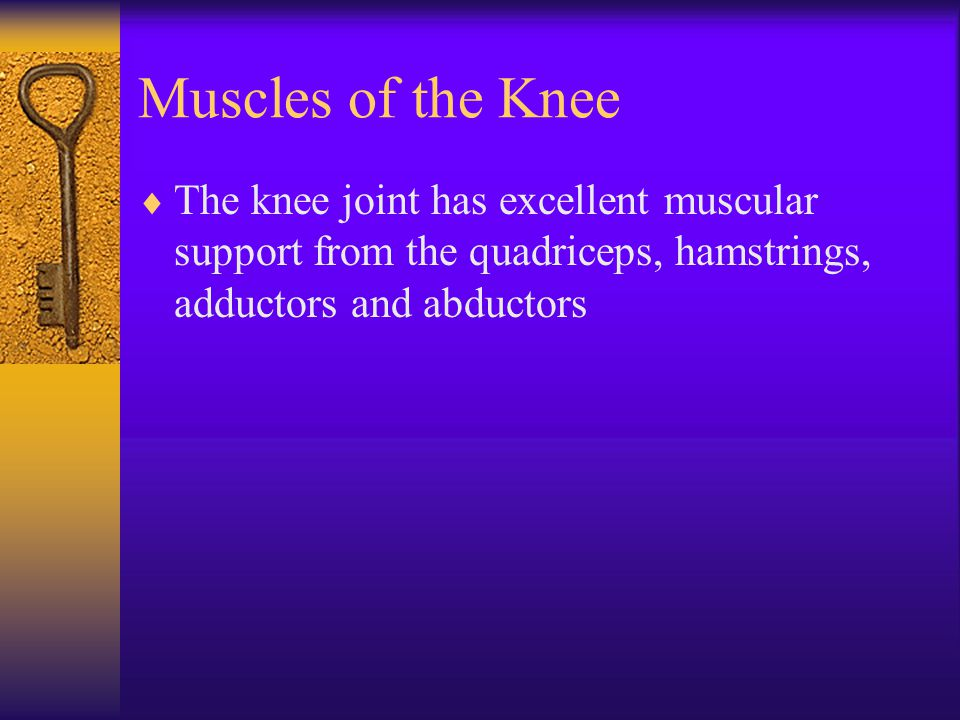 Muscles of the Knee The knee joint has excellent muscular support from the quadriceps, hamstrings, adductors and abductors.