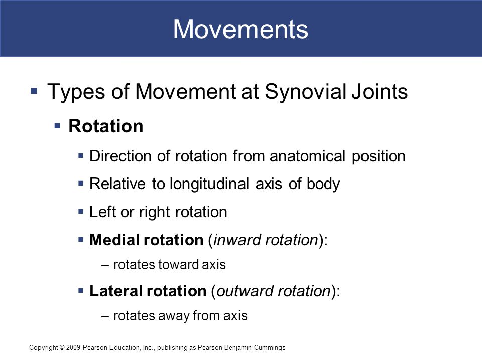 Movements Types of Movement at Synovial Joints Rotation