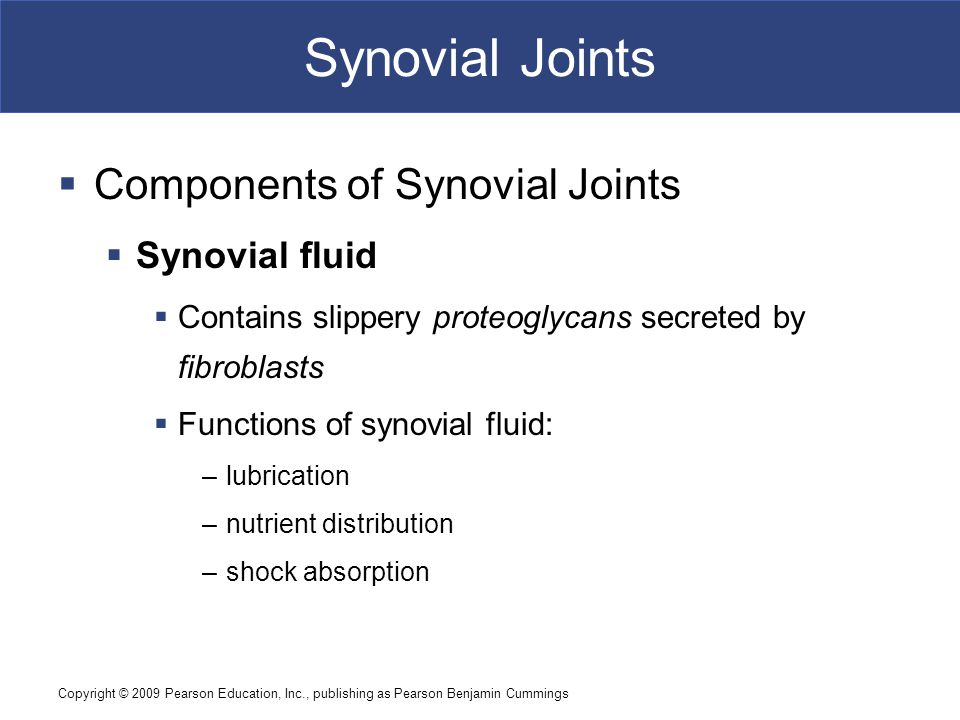 Synovial Joints Components of Synovial Joints Synovial fluid