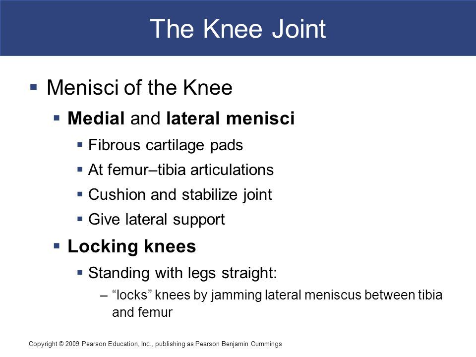 The Knee Joint Menisci of the Knee Medial and lateral menisci