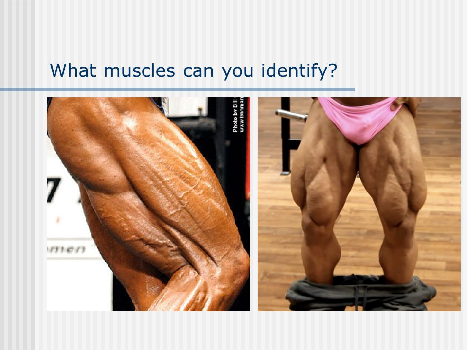 What muscles can you identify