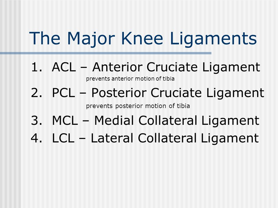 The Major Knee Ligaments