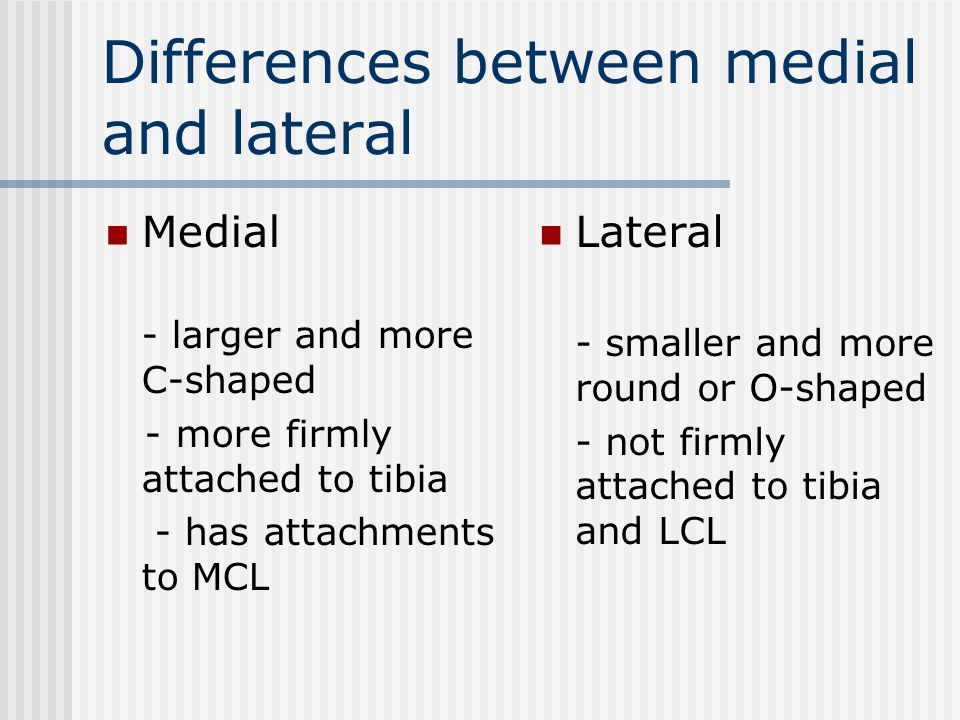 Differences between medial and lateral