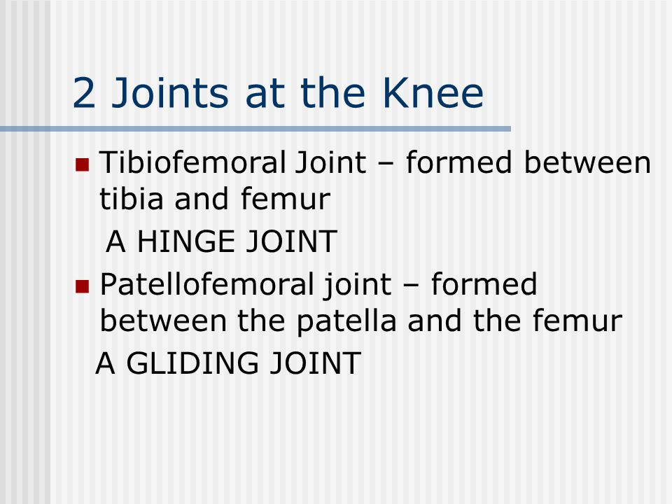 2 Joints at the Knee Tibiofemoral Joint – formed between tibia and femur. A HINGE JOINT.