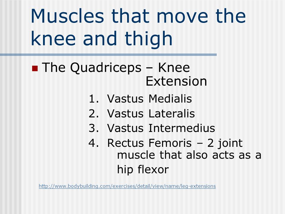 Muscles that move the knee and thigh