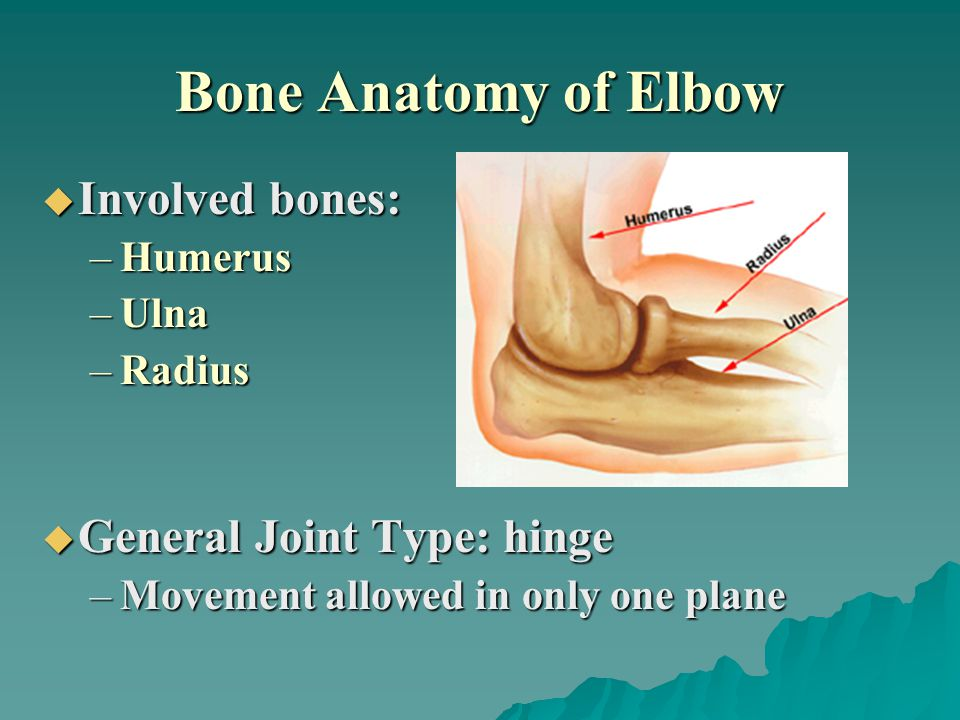 Bone Anatomy of Elbow Involved bones: General Joint Type: hinge