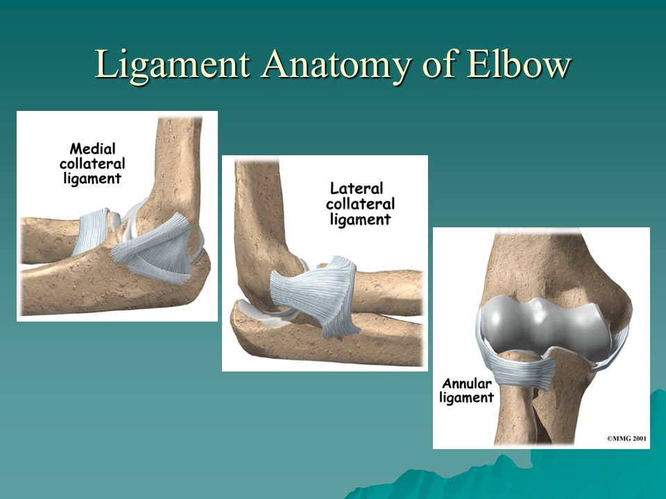 Ligament Anatomy of Elbow