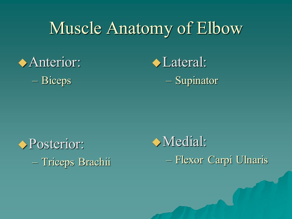 Muscle Anatomy of Elbow