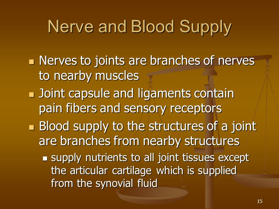 Nerve and Blood Supply Nerves to joints are branches of nerves to nearby muscles.