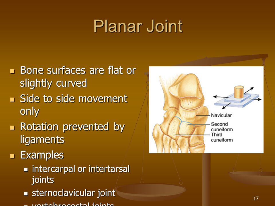 Planar Joint Bone surfaces are flat or slightly curved