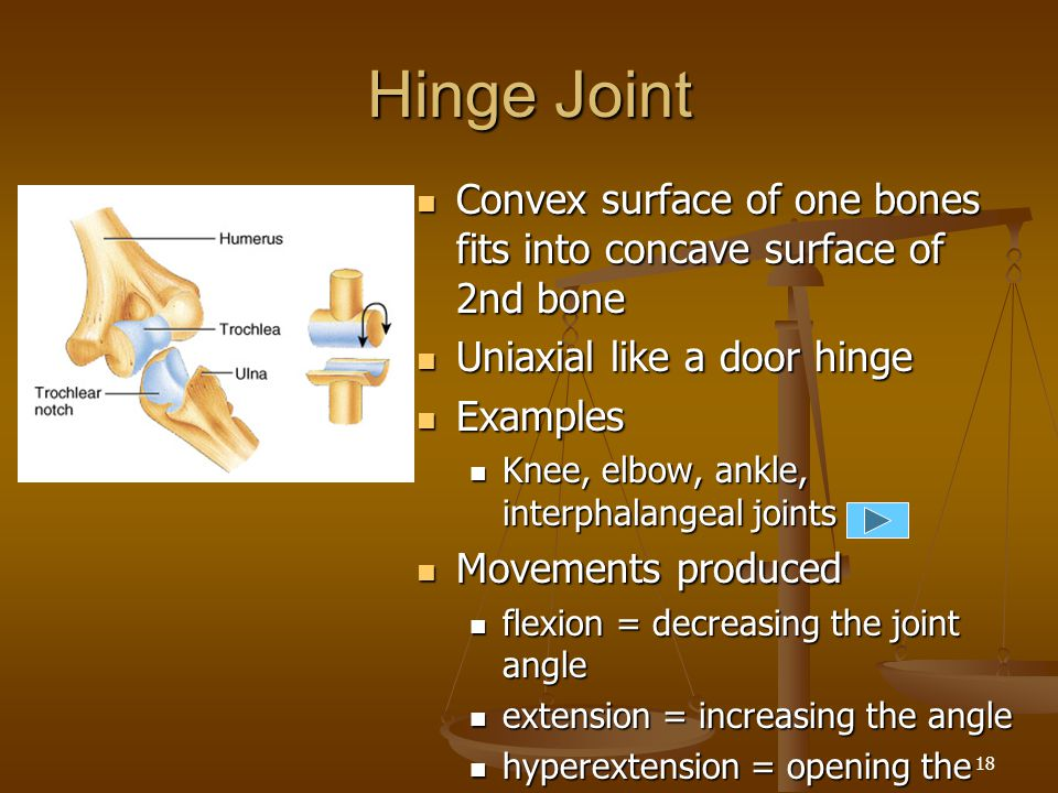 Hinge Joint Convex surface of one bones fits into concave surface of 2nd bone. Uniaxial like a door hinge.