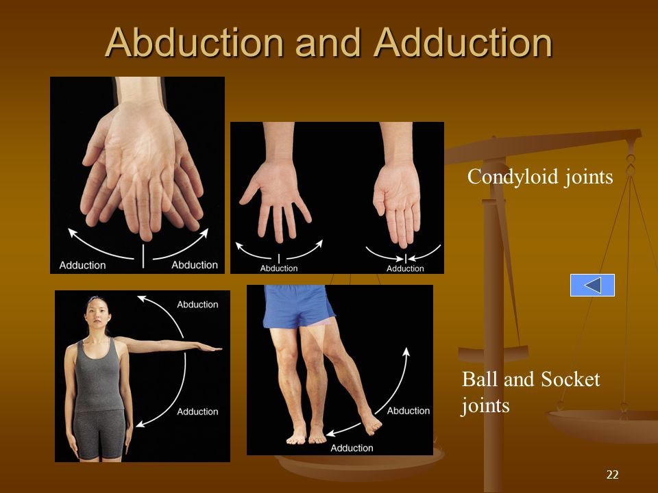 Abduction and Adduction