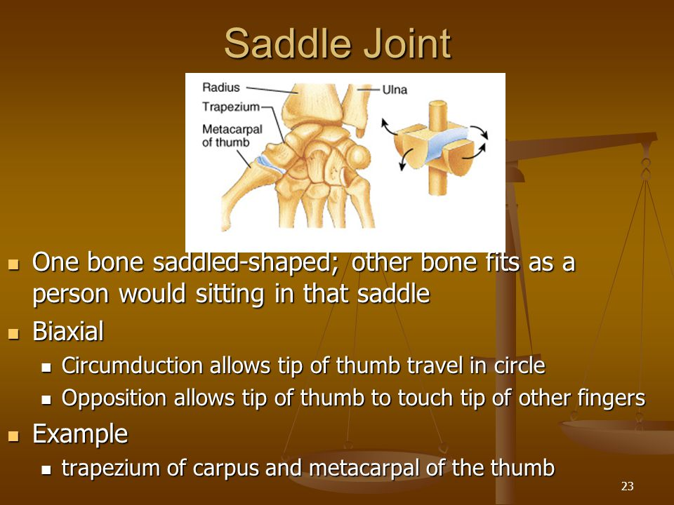 Saddle Joint One bone saddled-shaped; other bone fits as a person would sitting in that saddle. Biaxial.