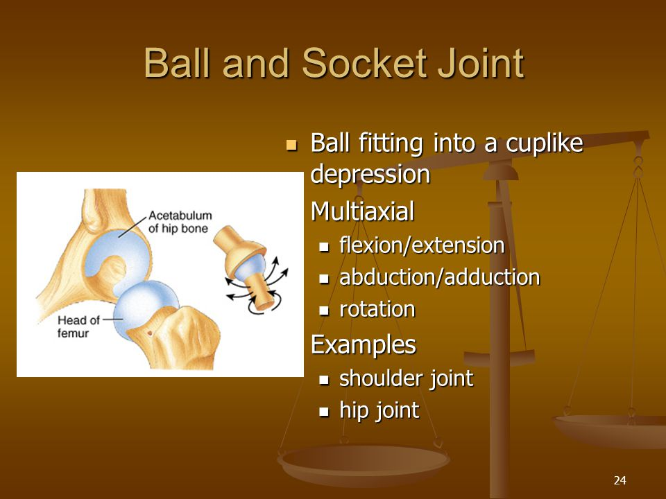 Ball and Socket Joint Ball fitting into a cuplike depression