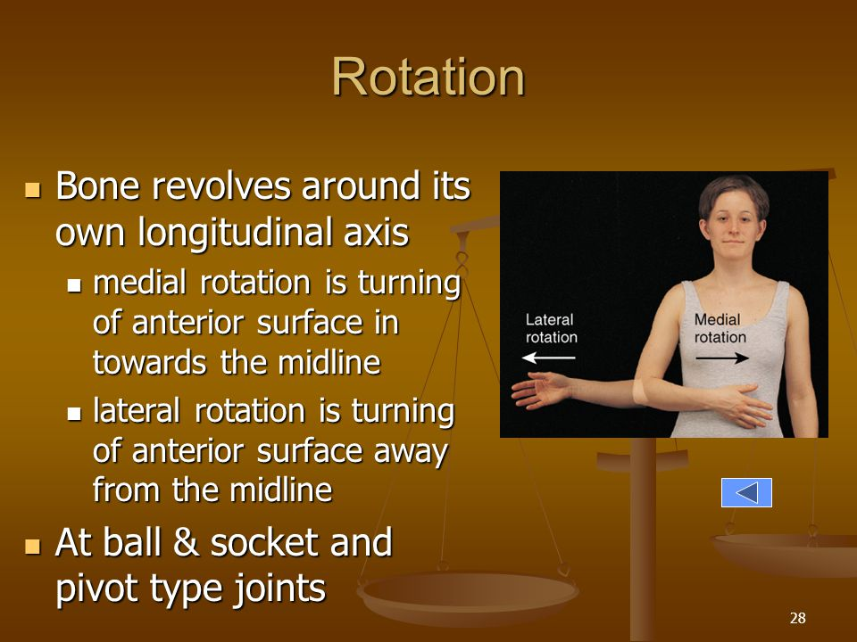 Rotation Bone revolves around its own longitudinal axis
