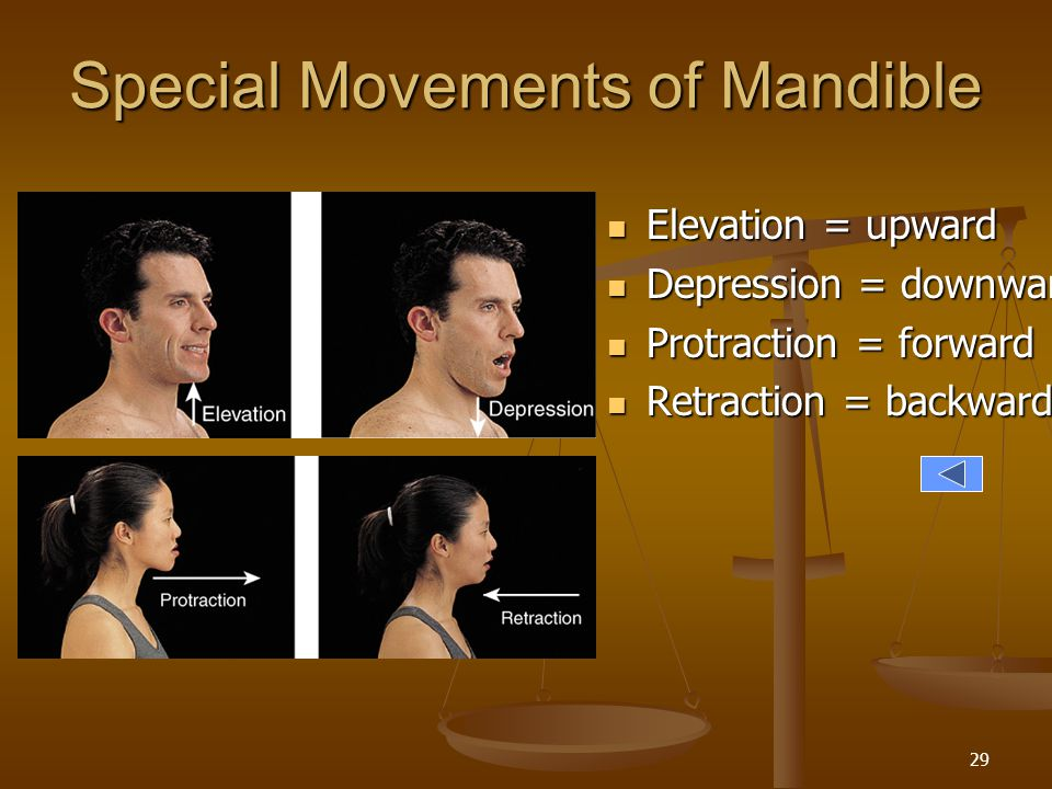 Special Movements of Mandible