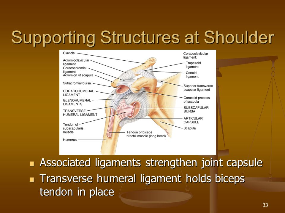 Supporting Structures at Shoulder
