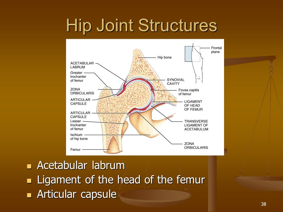 Hip Joint Structures Acetabular labrum