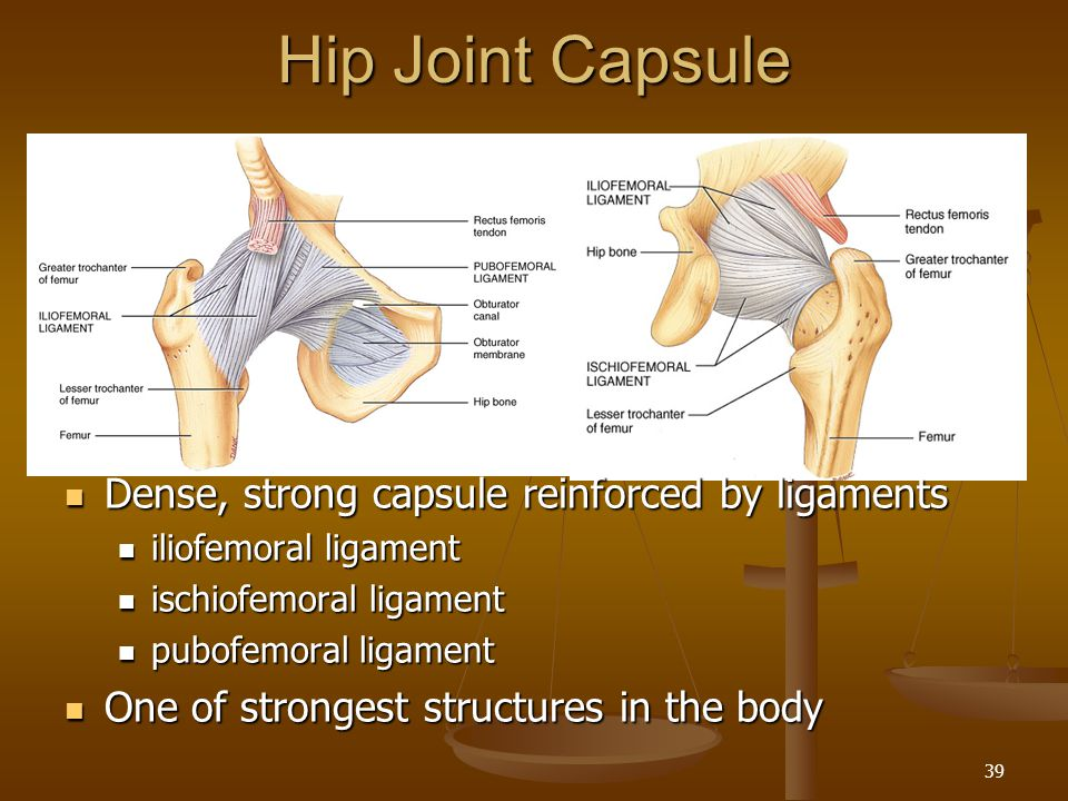 Hip Joint Capsule Dense, strong capsule reinforced by ligaments