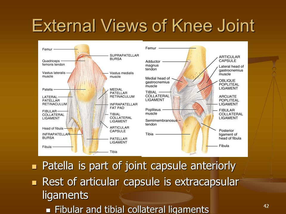 External Views of Knee Joint