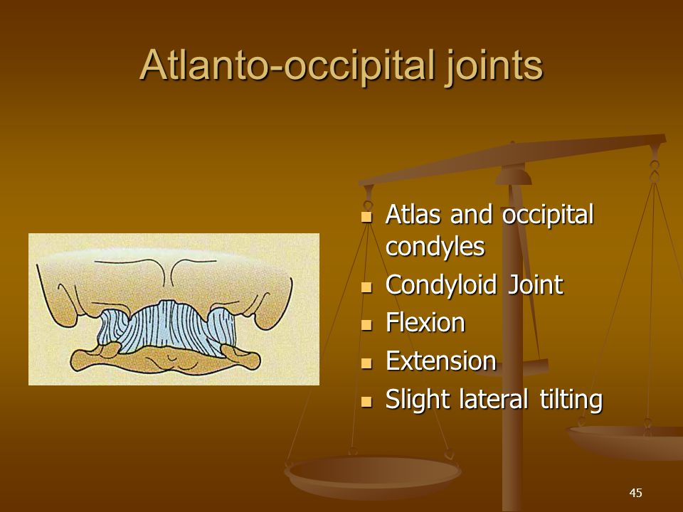 Atlanto-occipital joints
