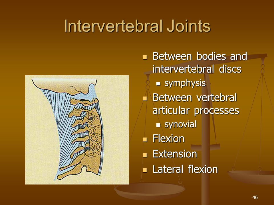 Intervertebral Joints