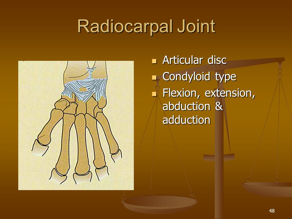 Radiocarpal Joint Articular disc Condyloid type