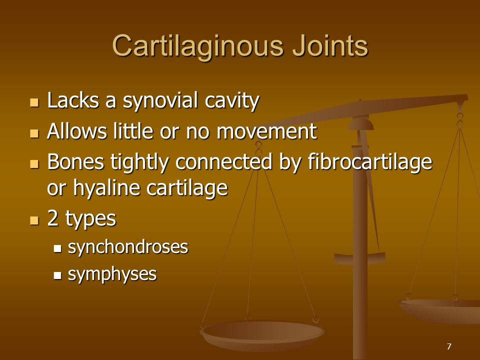 Cartilaginous Joints Lacks a synovial cavity