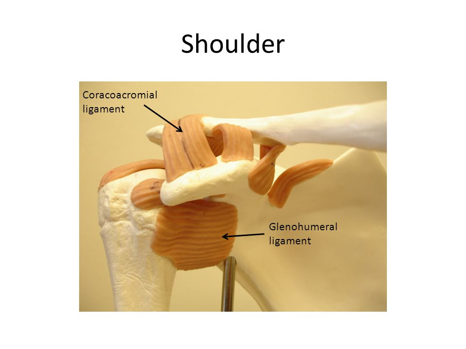Shoulder Coracoacromial ligament Glenohumeral ligament