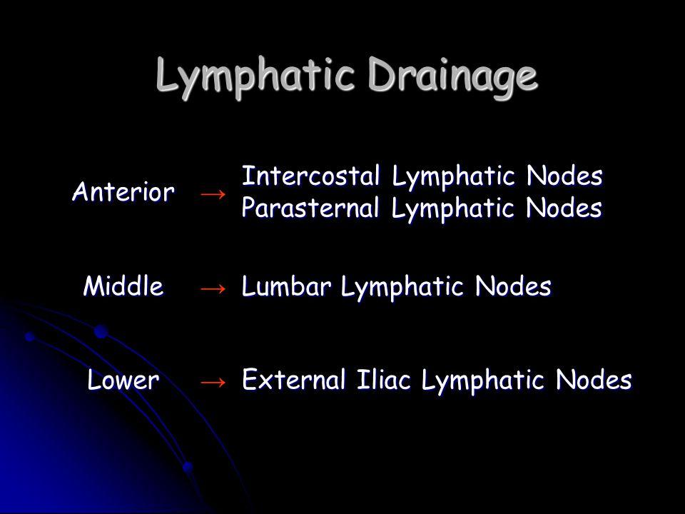 Lymphatic Drainage Anterior →