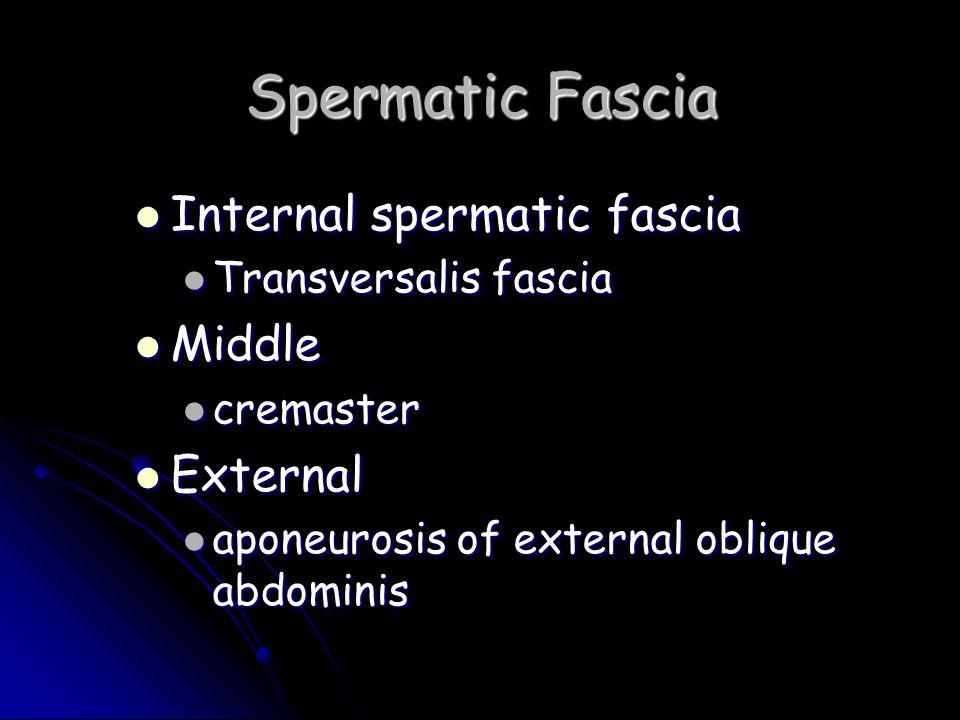 Spermatic Fascia Internal spermatic fascia Middle External