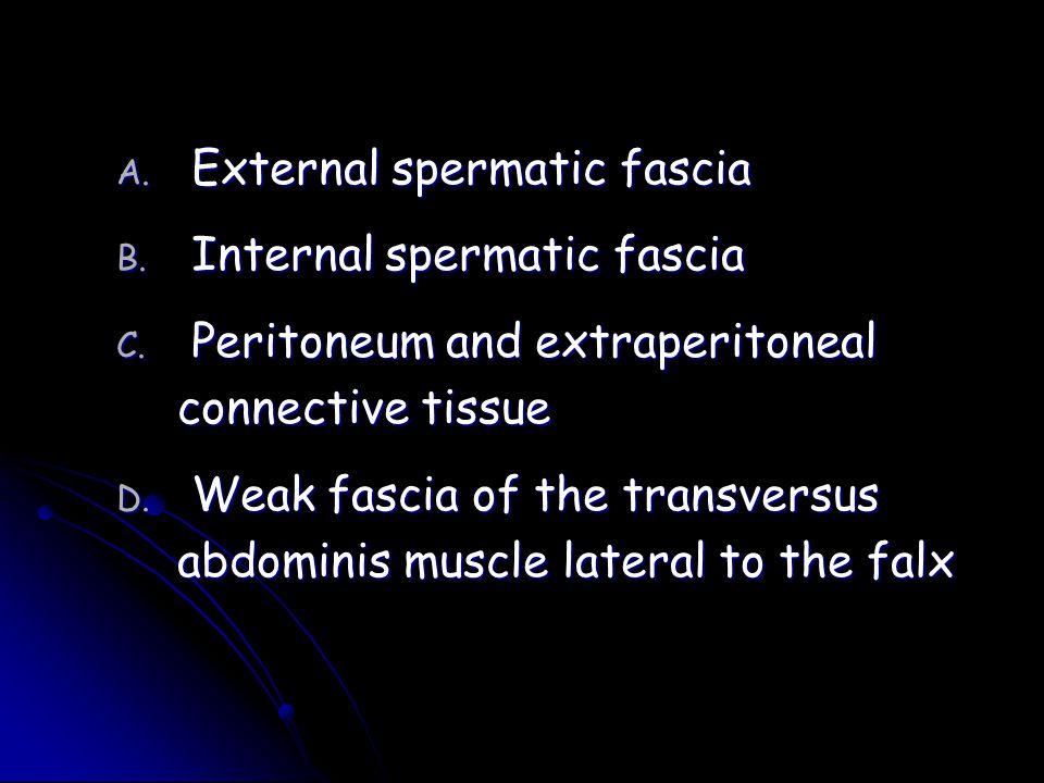 External spermatic fascia