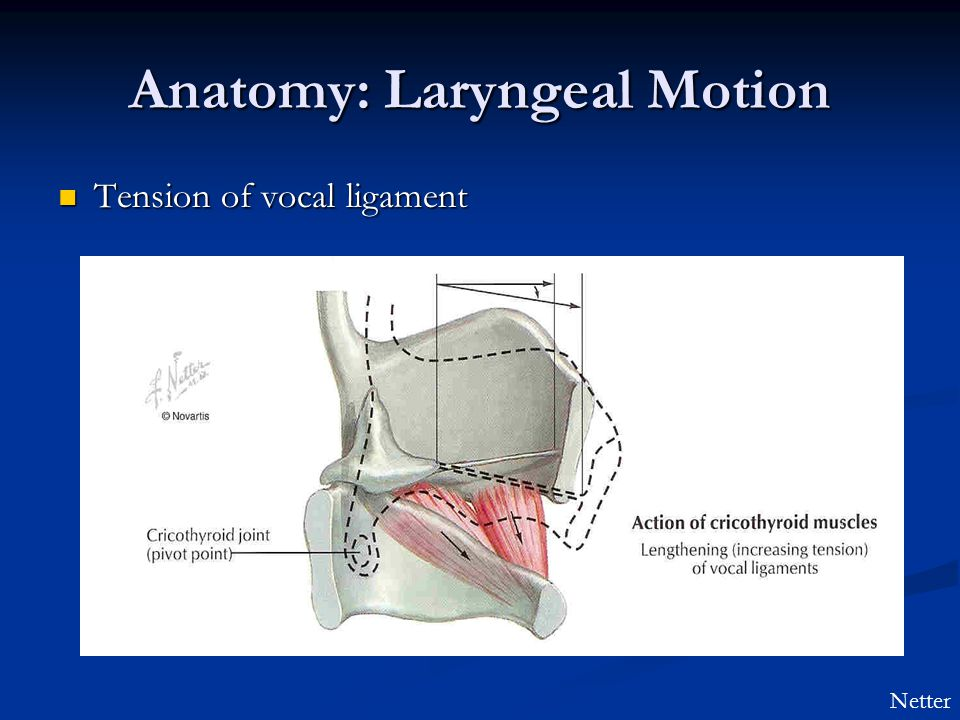 Anatomy: Laryngeal Motion