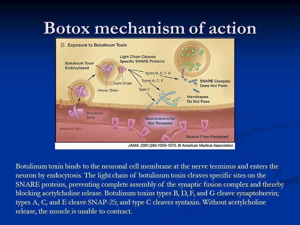 Botox mechanism of action
