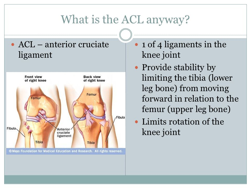 What is the ACL anyway ACL – anterior cruciate ligament