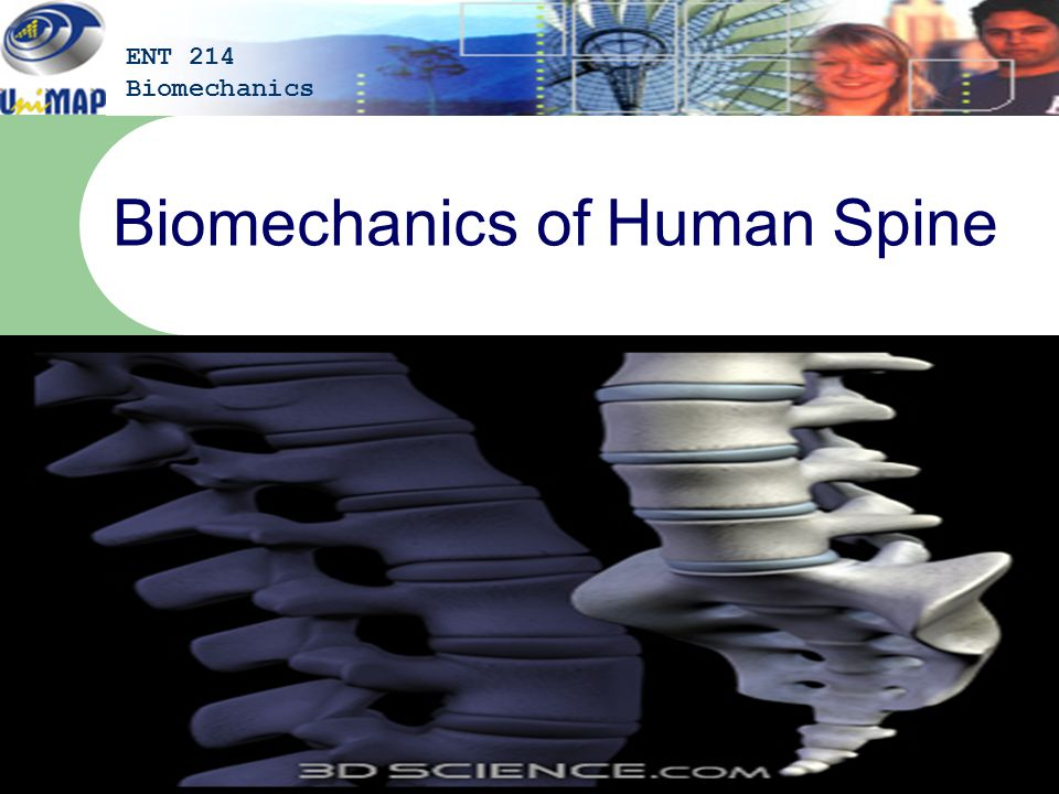Biomechanics of Human Spine