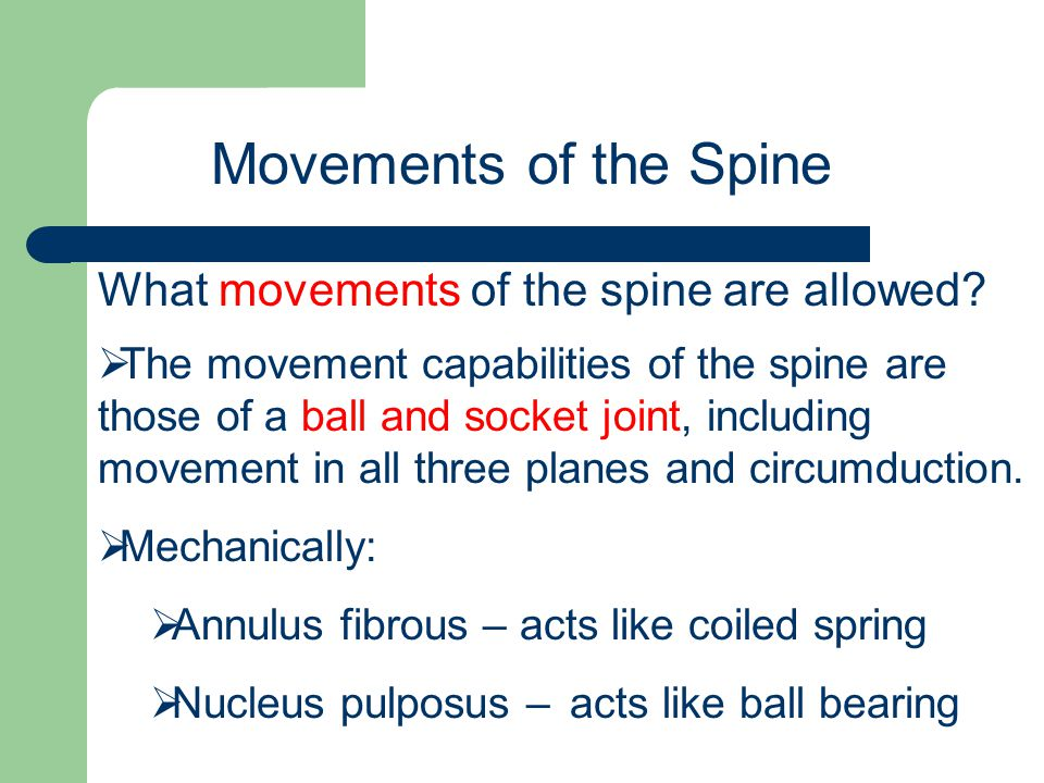 Movements of the Spine What movements of the spine are allowed
