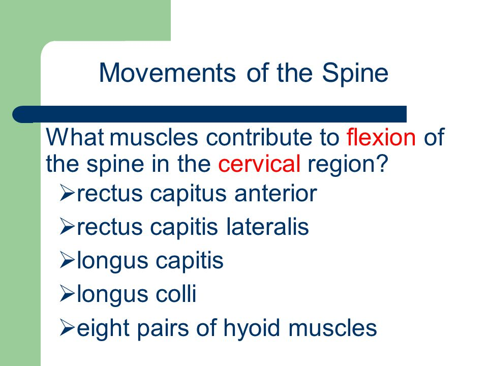 Movements of the Spine What muscles contribute to flexion of the spine in the cervical region rectus capitus anterior.