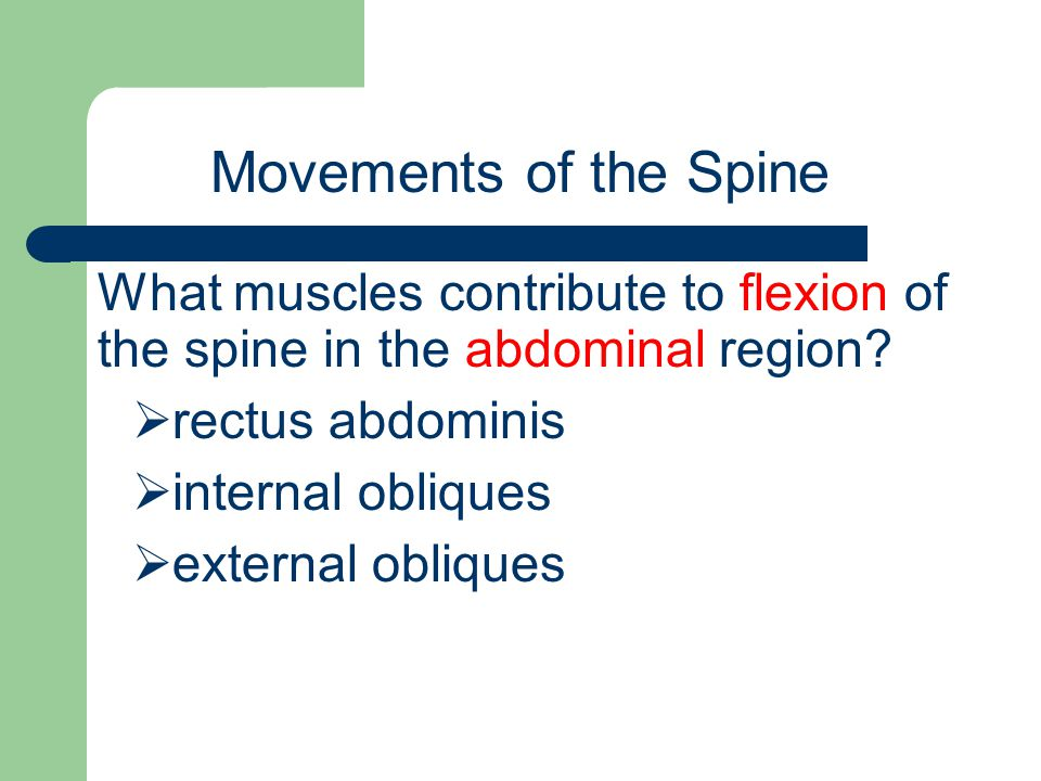 Movements of the Spine What muscles contribute to flexion of the spine in the abdominal region rectus abdominis.