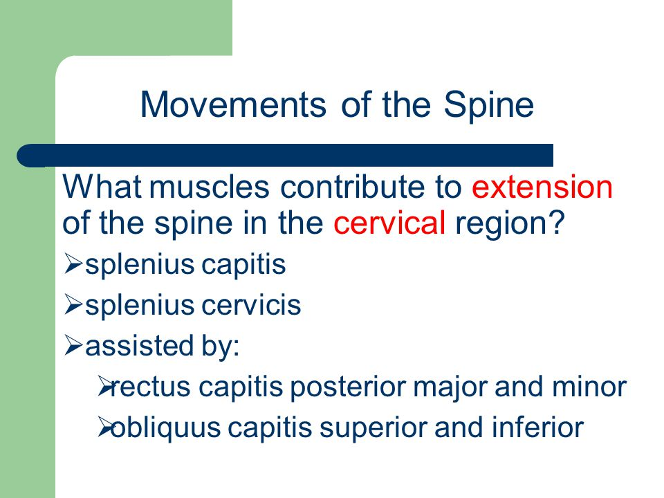 Movements of the Spine What muscles contribute to extension of the spine in the cervical region splenius capitis.