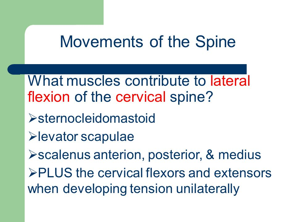 Movements of the Spine What muscles contribute to lateral flexion of the cervical spine sternocleidomastoid.