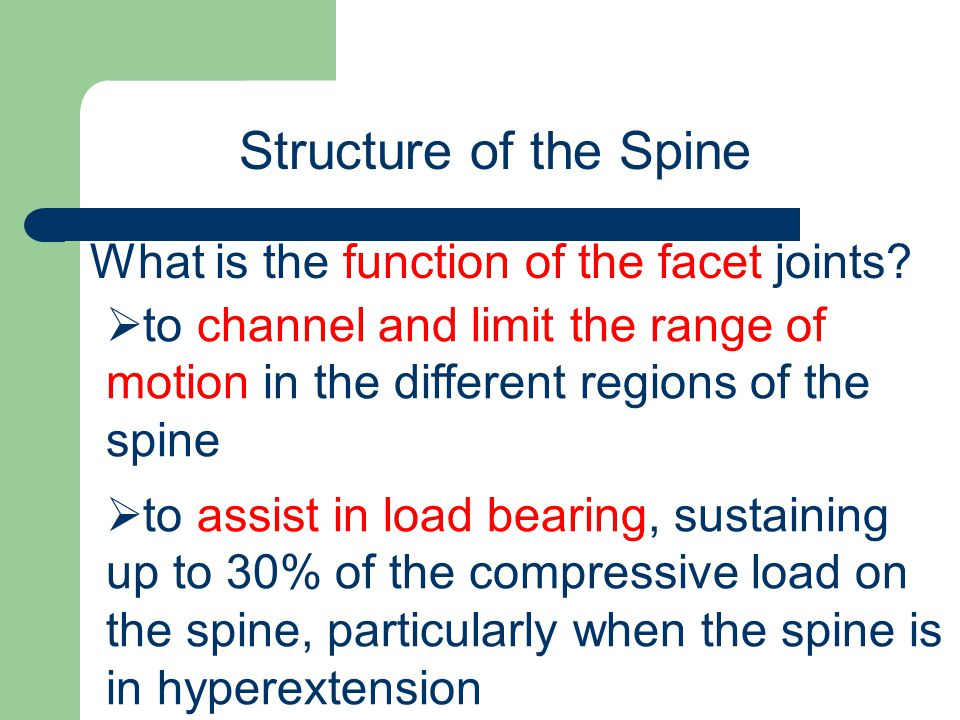 Structure of the Spine What is the function of the facet joints